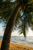 Palm on the beach in Thailand. royalty free stock photography