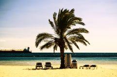Palm beach. Las Teresitas, Santa Cruz de Tenerife Spain stock photos