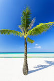 Palm on the beach Royalty Free Stock Photo