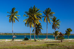 Palm beach of Mafia Island Stock Images