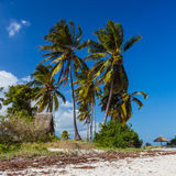 Palm beach of Mafia Island Royalty Free Stock Image