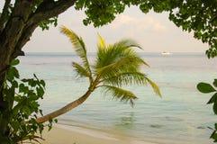 Palm Beach. On the Maldives stock photography