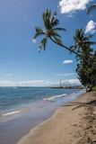 The palm on the beach, Maui. A view of a beach with the palm in Maui, Hawaii Stock Photo
