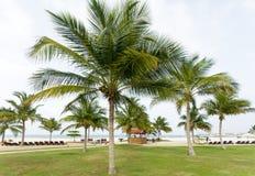 Palm Beach Ocean umbrella sunbed sand tropical summer travel Royalty Free Stock Image