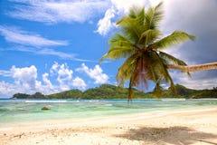 Palm Beach och vit sand royaltyfri bild