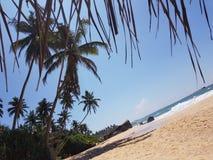 Palm Beach op de oceaan stock foto