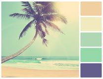 Palm on a beach with palette color swatches Royalty Free Stock Photography