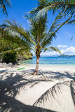 Palm Beach perfeita Fotos de Stock