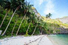 Palm Beach perfeita Foto de Stock