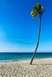 Palm on beach Stock Photography
