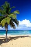 Palm on beach, Playa Grande Stock Image