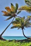 Palm Beach romántica Fotos de archivo