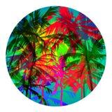 Palm beach 4 Stock Photo