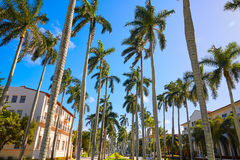 Palm Beach royal Palm Way Florida US Stock Photography
