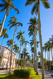 Palm Beach royal Palm Way Florida US Royalty Free Stock Image