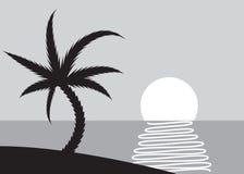 Palm beach scene Stock Images