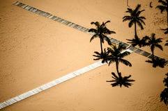 Palm beach scene. Las Teresitas, Santa Cruz de Tenerife (Spain stock image