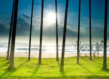 Palm Beach With Shadow Royalty Free Stock Image