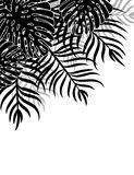 Palm beach 20. Silhouette tropical leaves on a white background. Natural Tropical Background Stock Illustration