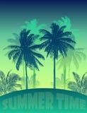 Palm beach 23 Stock Image