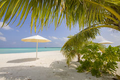 Palm at the beach with sunshades Stock Images