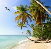Palm Beach Tobago royalty-vrije stock foto