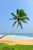 Palm and beach Stock Image