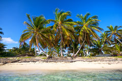 Palm beach Royalty Free Stock Image