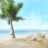 Palm on the beach. Stock Image