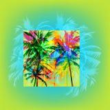 Palm beach Stock Photos