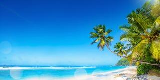 Palm Beach in Tropisch Paradijs stock foto's