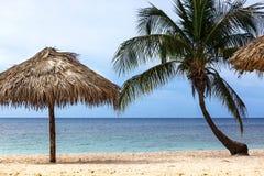Palm and beach umbrella Stock Photos