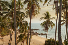 Palm beach. View of nice tropical beach with some palms royalty free stock images