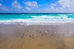Palm Beach wyrzucać na brzeg linię brzegową Floryda USA Fotografia Stock