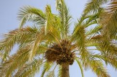 Palm Beachträdgård i Benidorm Spanien arkivfoton
