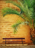 Palm and bench Stock Photo