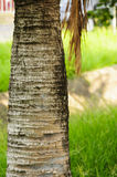 Palm. Betel palm in the university  at Thailand Stock Images