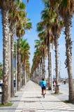 Palm bicycle lane Stock Image