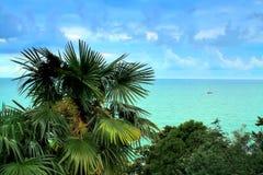 Palm bij het overzees met een jacht Stock Foto's