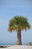 Palm bij het strand Royalty-vrije Stock Foto