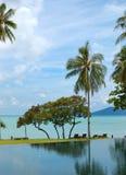 Palm bij het strand en het zwembad Royalty-vrije Stock Foto's