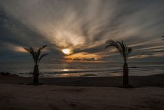 Palm bij zonsondergang Royalty-vrije Stock Afbeelding