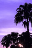 Palm bij Zonsondergang Royalty-vrije Stock Foto's