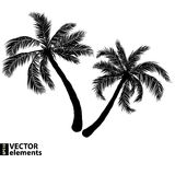 Palm black silhouette Stock Photography