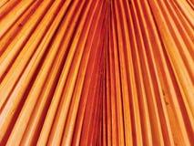 Palm blad-droge oranje, geweven achtergrond Royalty-vrije Stock Foto's