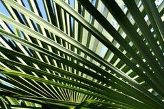 Palm-bladeren achtergrond Royalty-vrije Stock Afbeelding