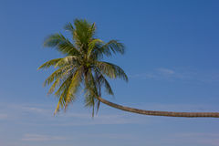 Palm in blauwe hemel Stock Foto