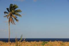 Palm, blauwe hemel, vrij recht als achtergrond Stock Afbeeldingen