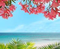 Palm, bloemen en zand Stock Foto