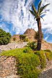 Palm, blue cloudy sky, green plant, mountains Stock Images